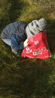 Toddler-friendly, the sloe picking kept this fella occupied for a while